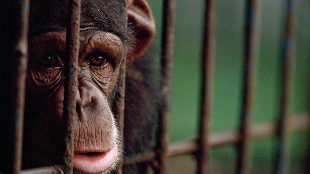 Міністерство культури відмовилось від купівлі тварин для державних цирків