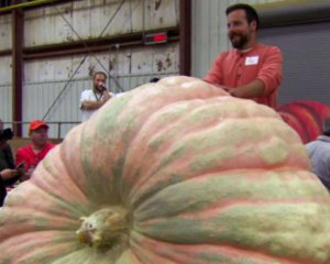 Показали гігантський гарбуз-рекордсмен вагою з автомобіль