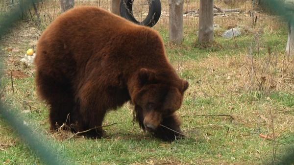 На Житомирщині ведмеді прокинулися від зимової сплячки