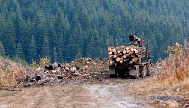 Директора лісгоспу звинувачують у завданні збитків на 15 мільйонів