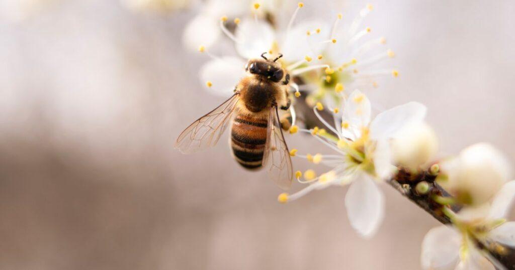 """""""У таку погоду бджола не працює"""": весняного меду в Україні буде мало"""