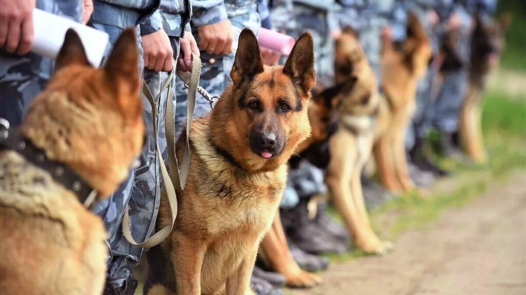 Прикордонний пес знайшов в салоні автівки мисливські набої