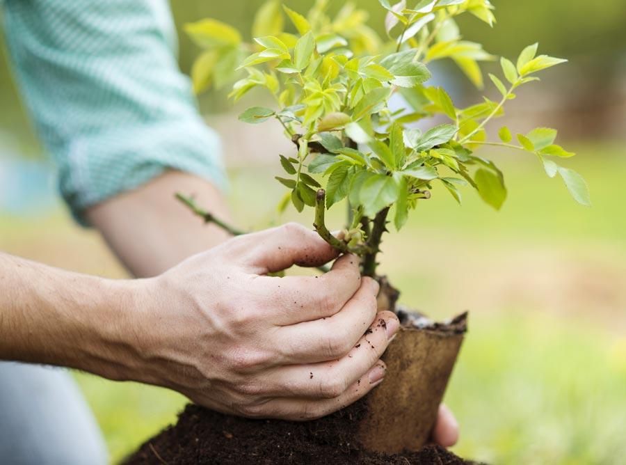 Лісівники Житомирщини висадять понад 200 тисяч дерев